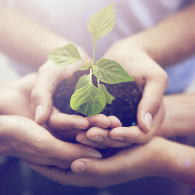 A cropped image of three people's hands holding a growing plant